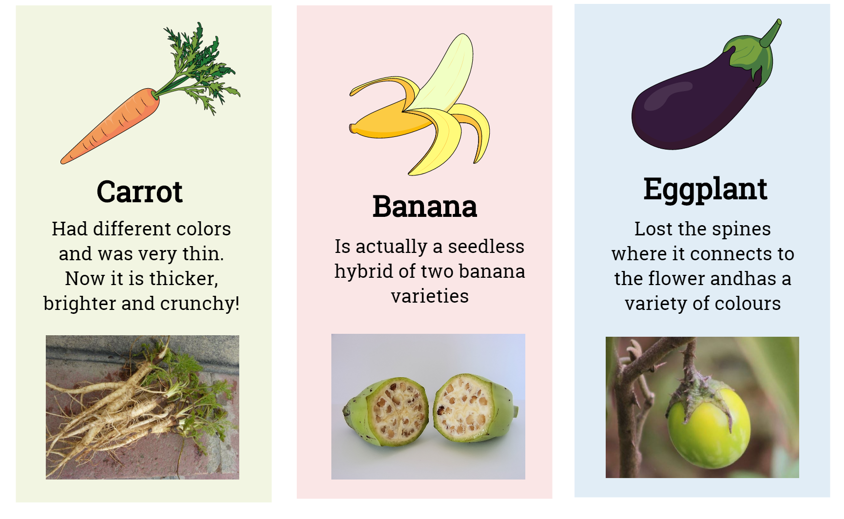 Infographics: Domesticated fruits and vegetables