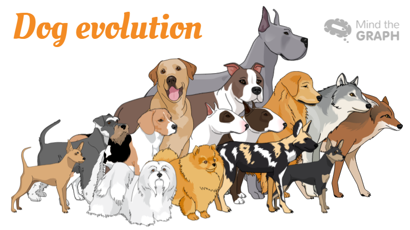 Dog evolution: A scientific infographic of our best friend