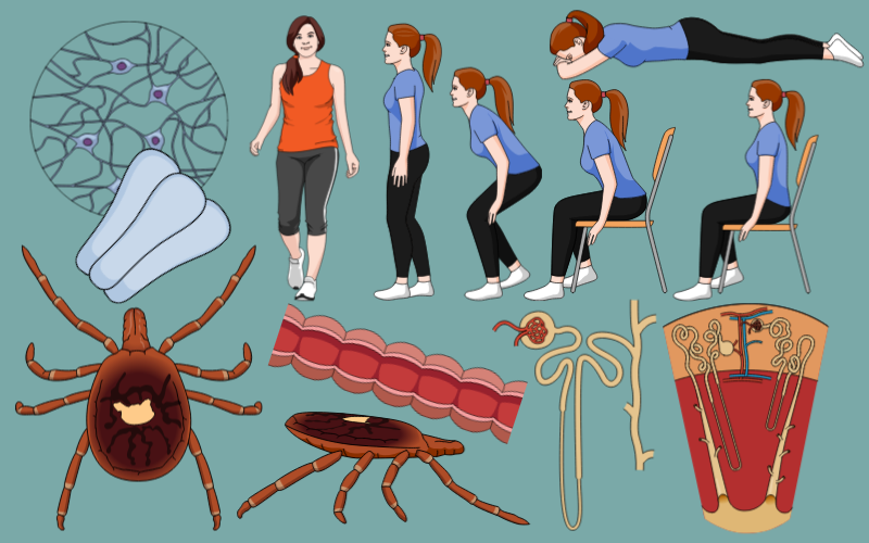 #2  Scientific illustrations of the week: What is new for you