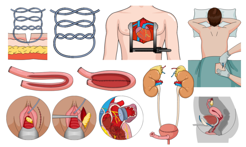 Find thousands of medical illustrations on Mind the Graph