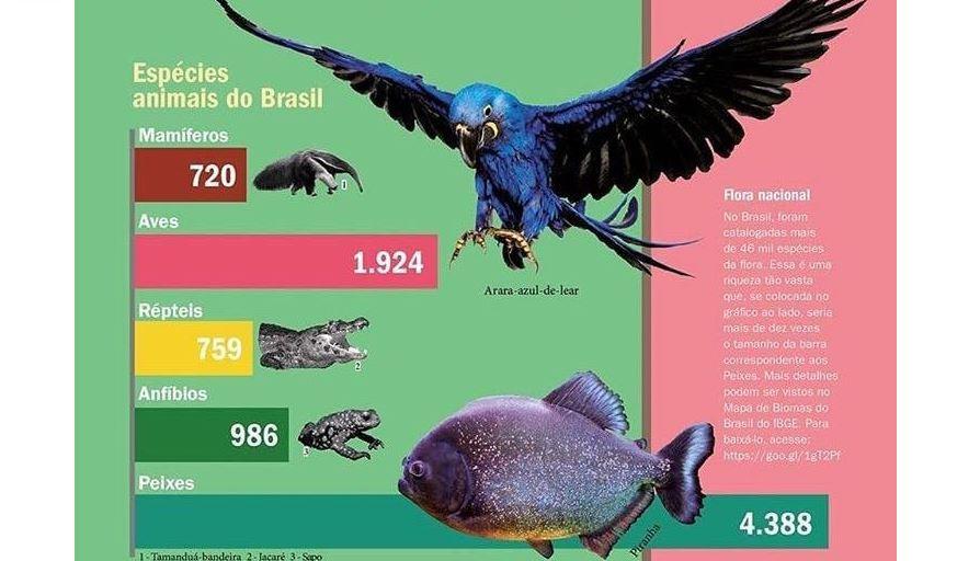 Brazilian biodiversity in stunning infographics