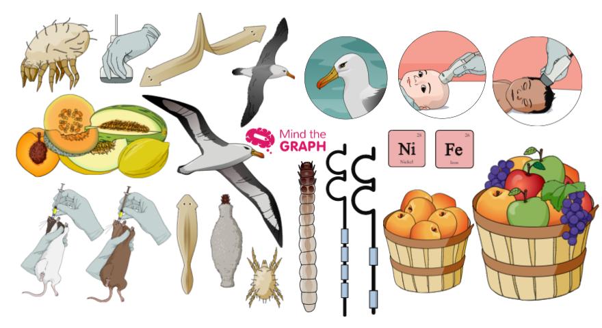 cover_scientific_illustrations