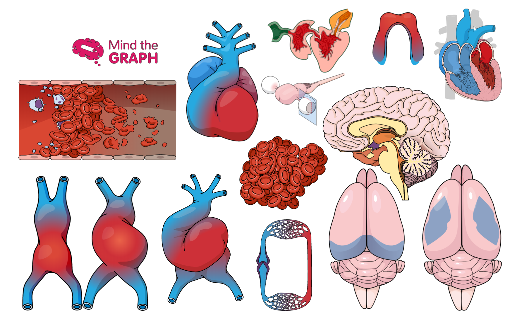 #31 Cardiology and neuroscience illustrations: The best medical illustrations