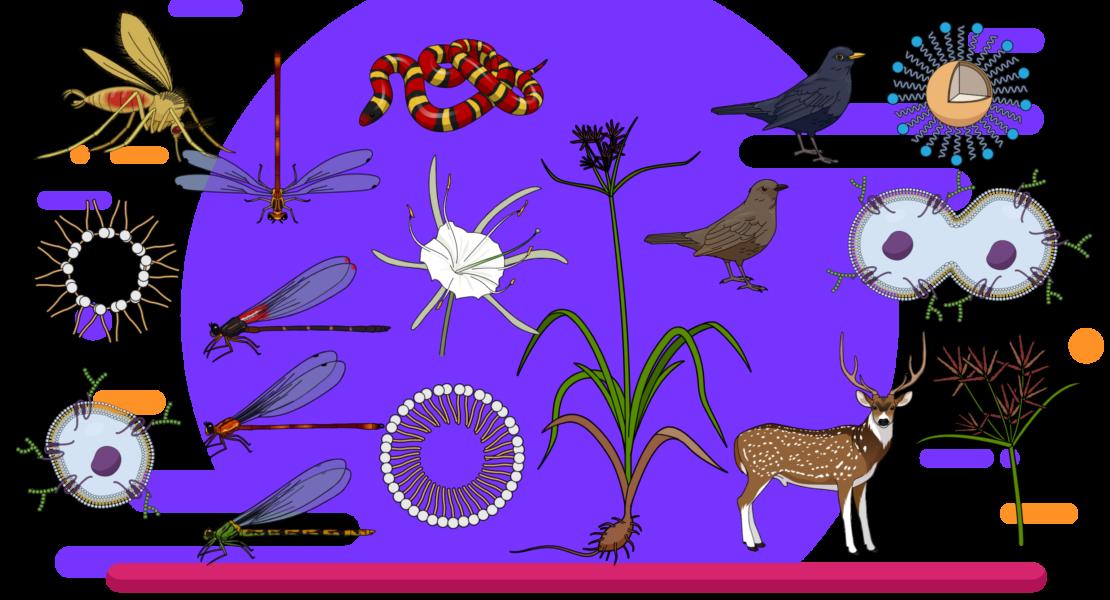 #36 Find accurate scientific illustrations online