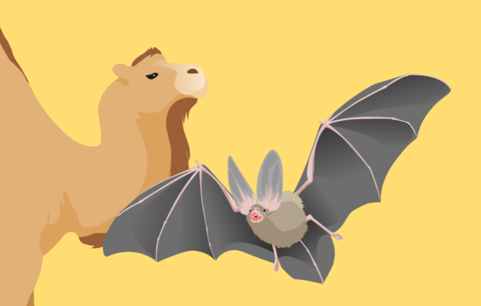 Coronavirus natural hosts