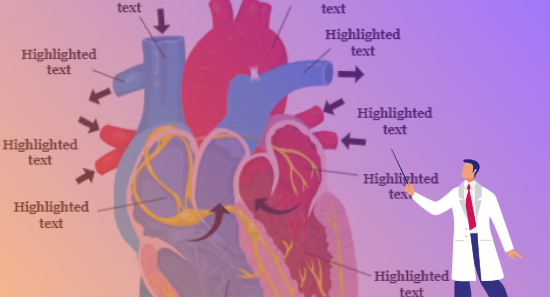 Human Anatomy – Scientific illustrations #45