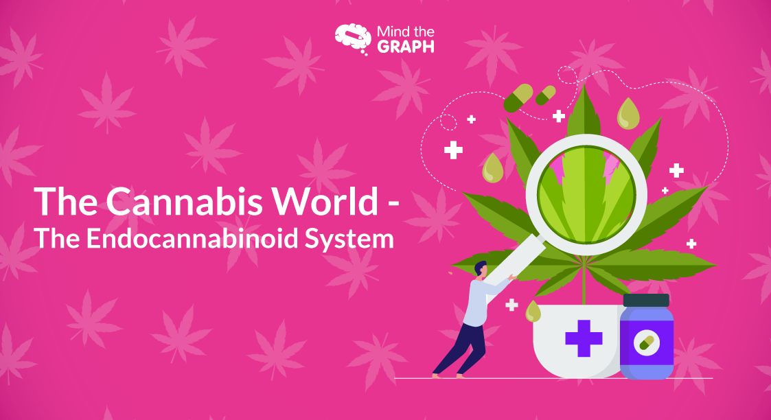 The Cannabis - World The Endocannabinoid System