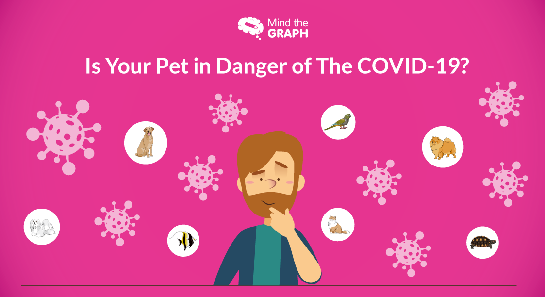 Is Your Pet in Danger of The COVID-19?