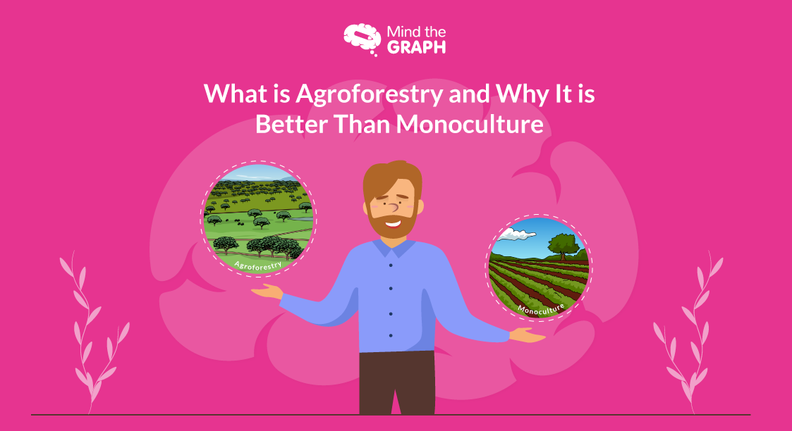 What is Agroforestry and Why It is Better Than Monoculture