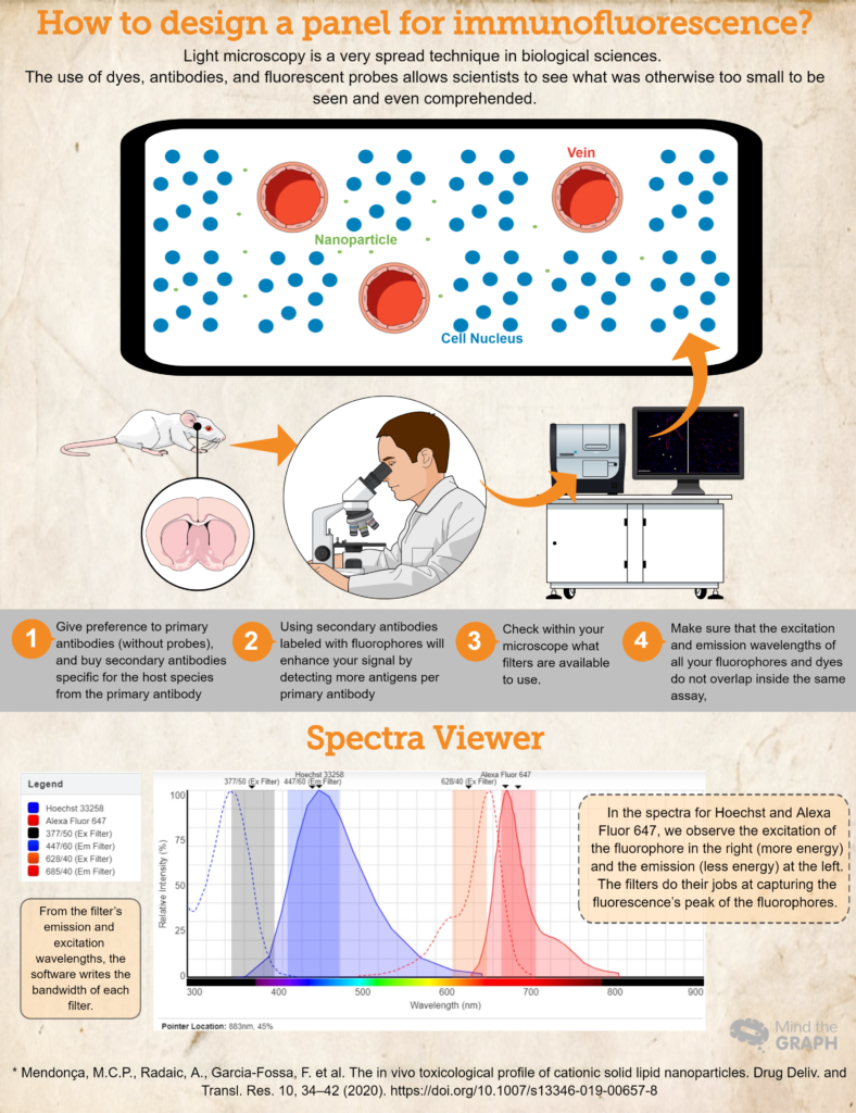 Mind the Graph infographic how to design a panel for immunofluorescence