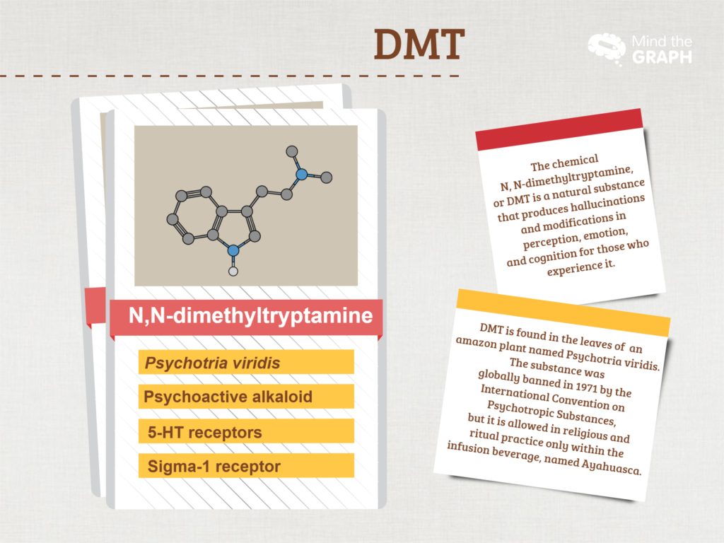 What it dmt infographic