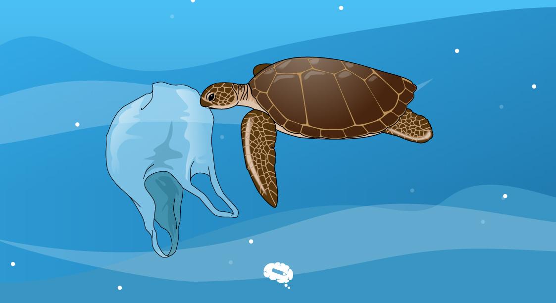 turtles plastic