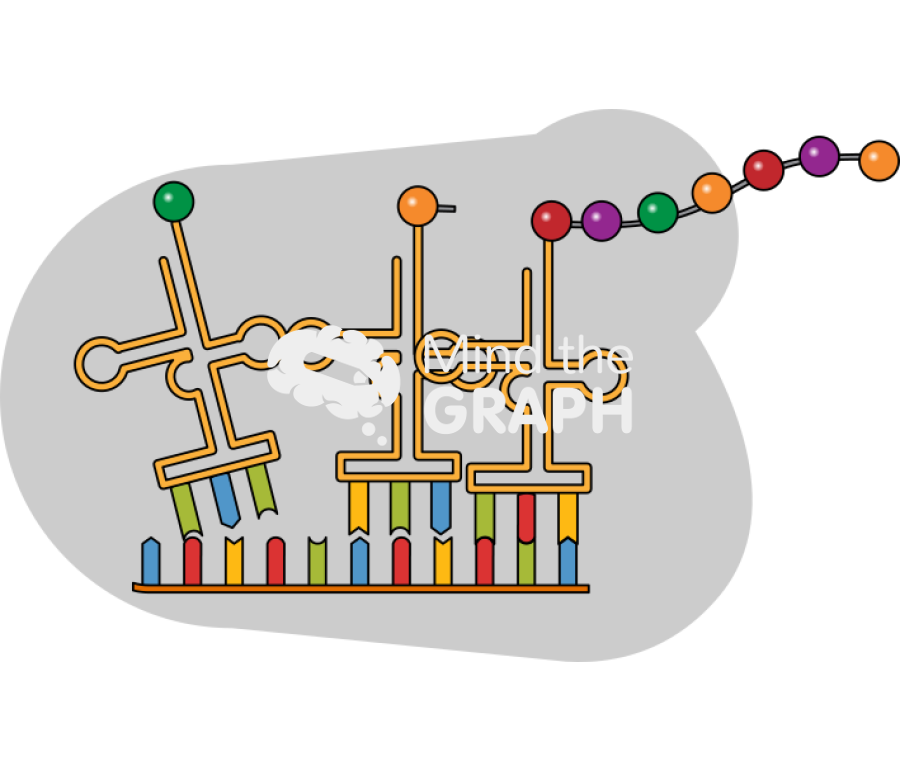 Mind the Graph illustration: Protein Synthesis