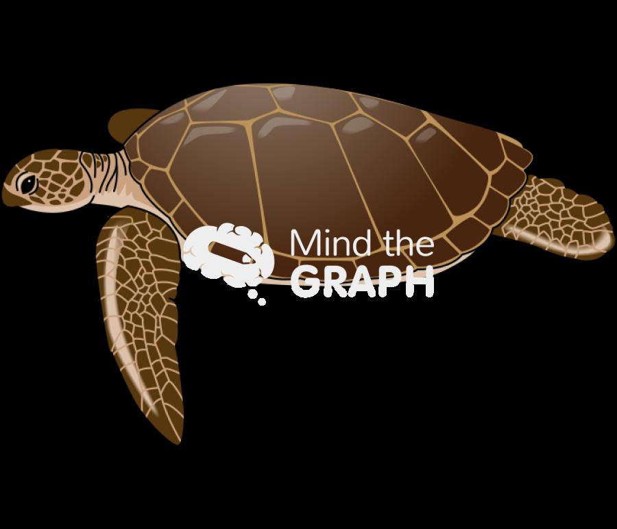 Mind the Graph Illustration: Cheloniidae